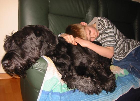 Resultado de imagen para Schnauzer Hund mit Kindern spielen