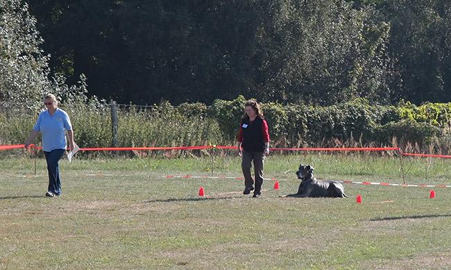 Der hund wird ins platz gelegt der hundeführer entfernt sich ca 10